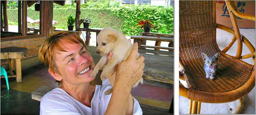 cats and dogs in lake toba, sumatra