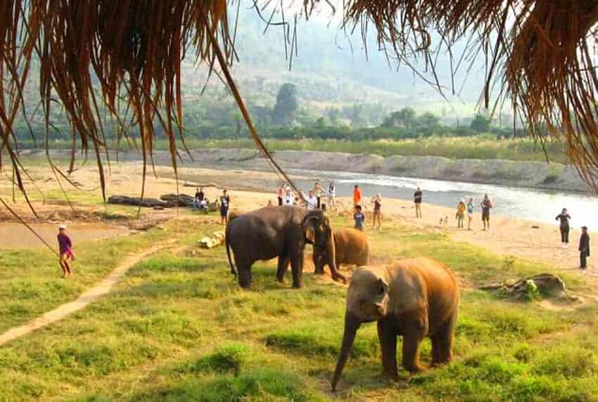 Image result for elephant nature park