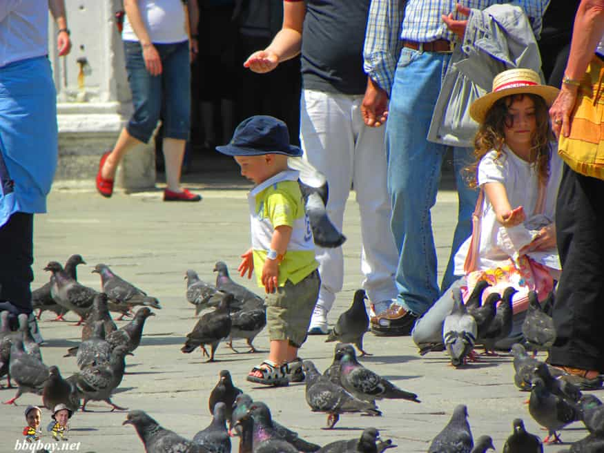 birds and people, Piazza San Marco, St. Mark's square, venice, italy