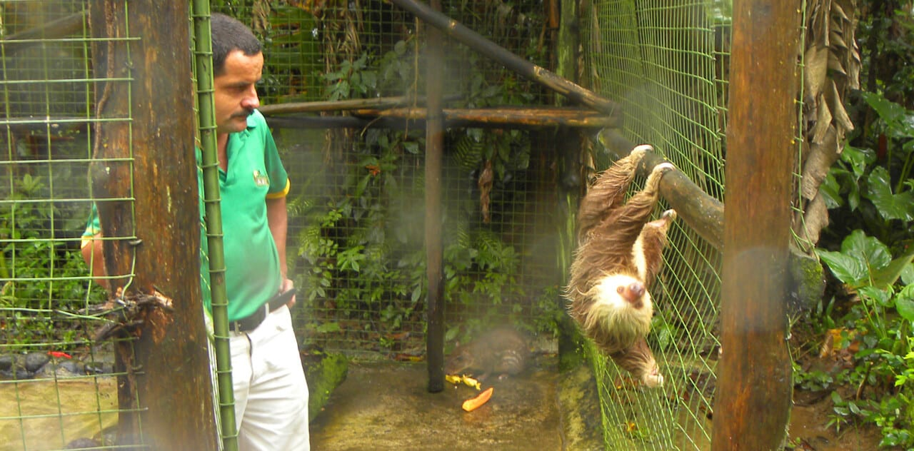 sloth at the Proyecto Asis animal rehabilitation center