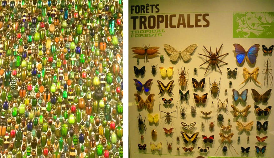 insectarium at the Montreal botanical gardens