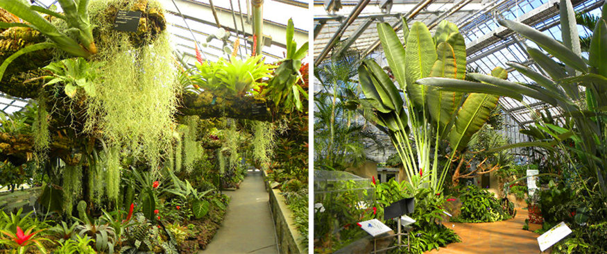 Permanent Indoor Exhibits At The Montreal Botanical Gardens