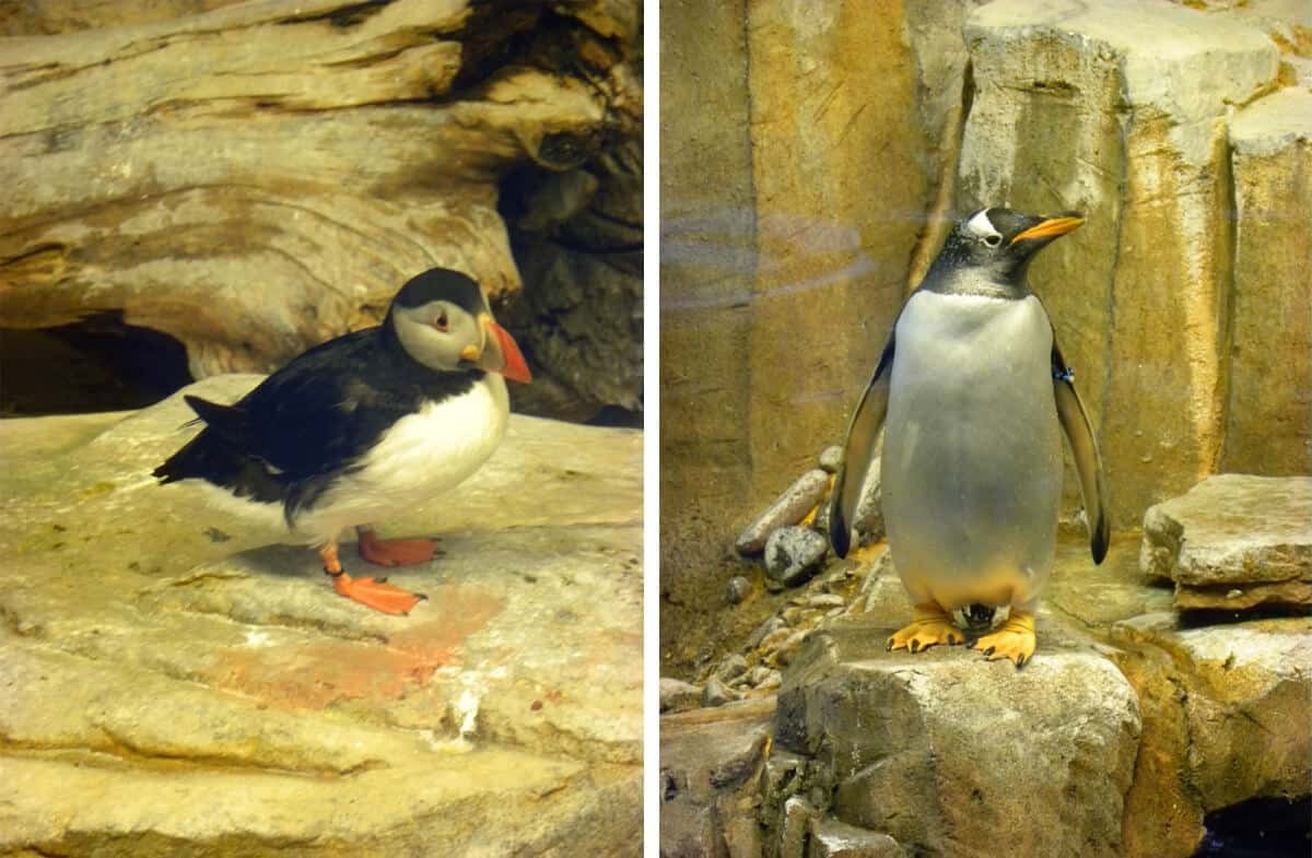 Penguins in Montreal's Biodome