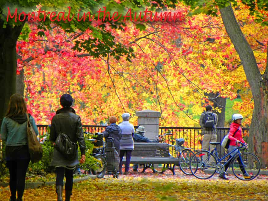 Montreal in the Autumn header