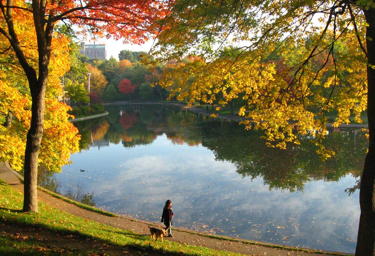 Montreal in the autumn. Park Lafontaine