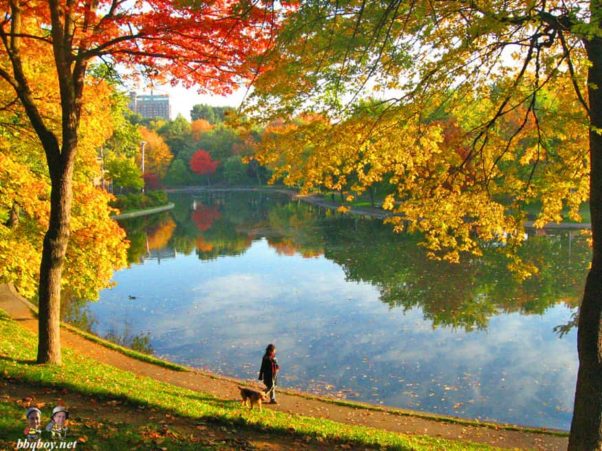 Parc Lafontaine in the fall, Montreal