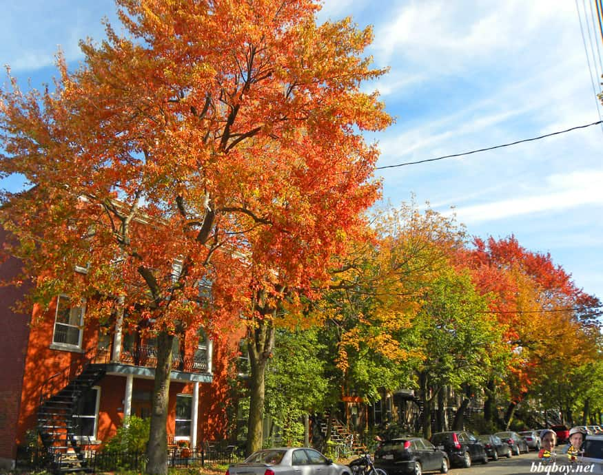 autumn on the Plateau mont Royal, Montreal (4)
