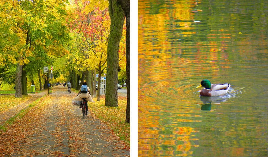 Montreal in the Autumn (Montreal's most beautiful season)