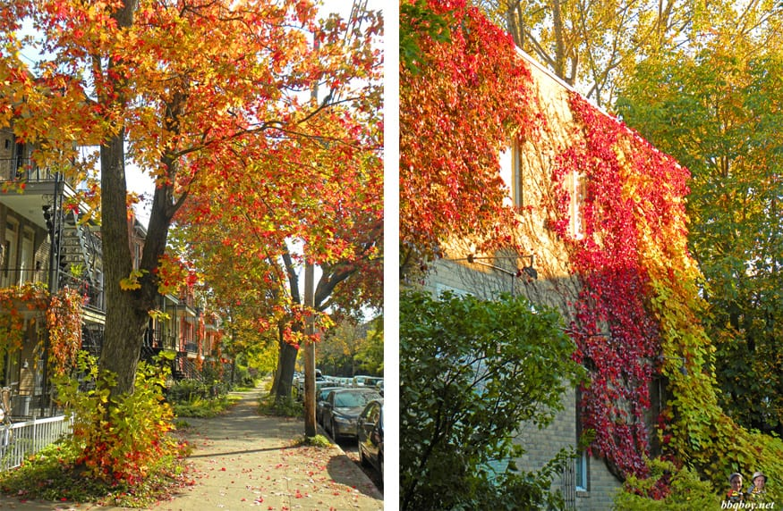 the colors of autumn in Montreal