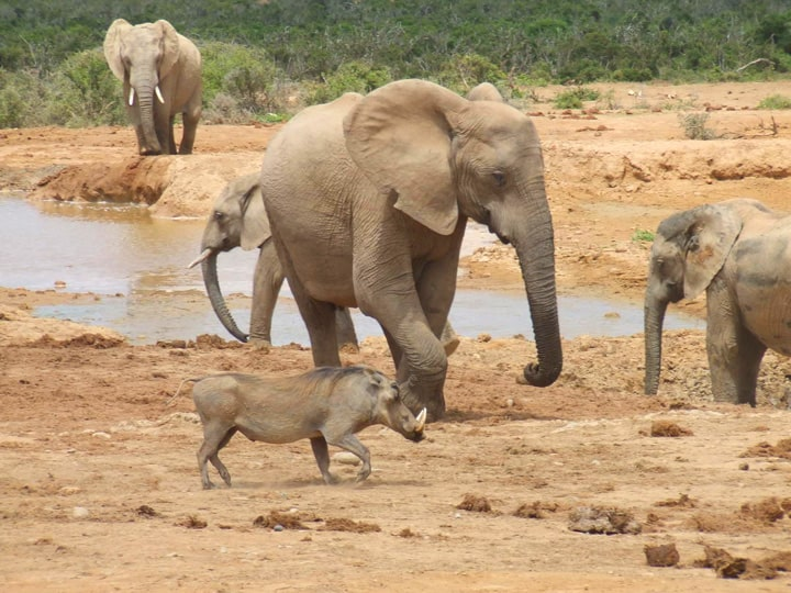 Addo Elephant Park, eastern cape province, south africa