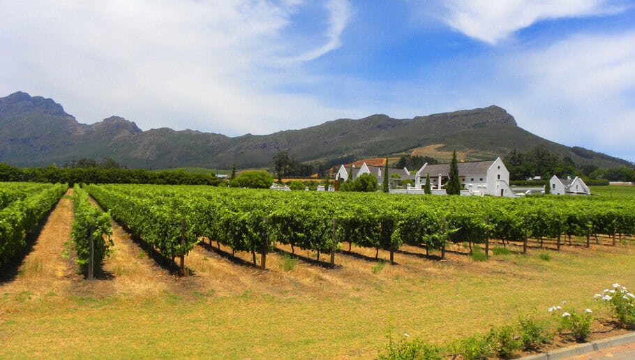 Winelands in the Cape, South Africa