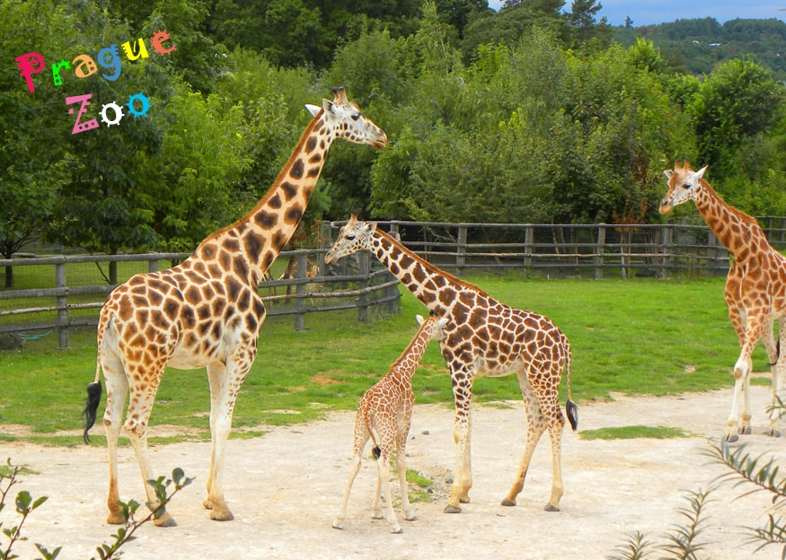 Prague zoo header