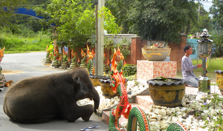 song kran praying with her mahout