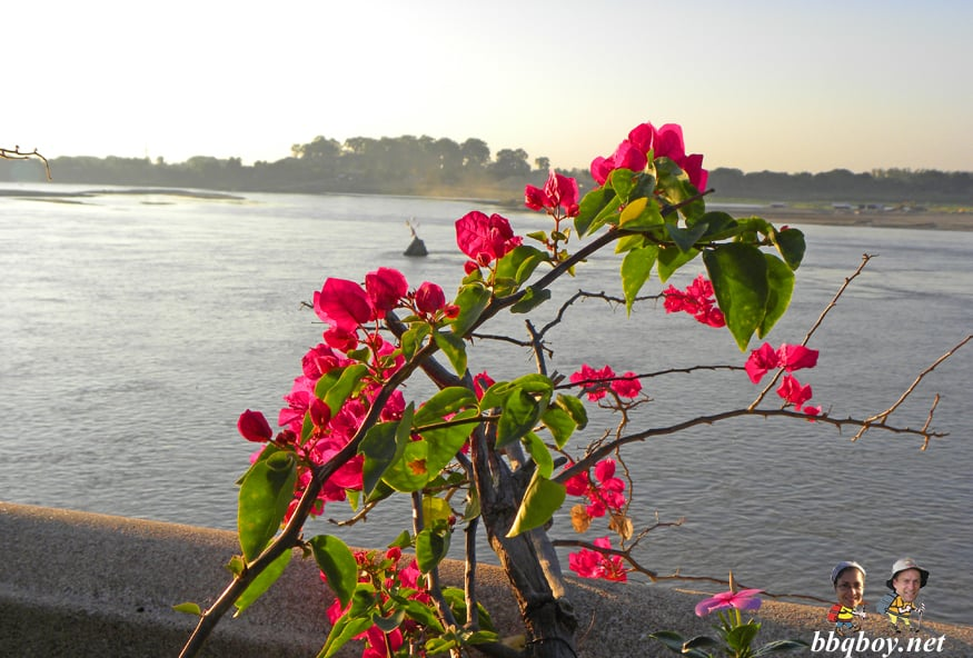 flowers looking at river chedi, nong khai
