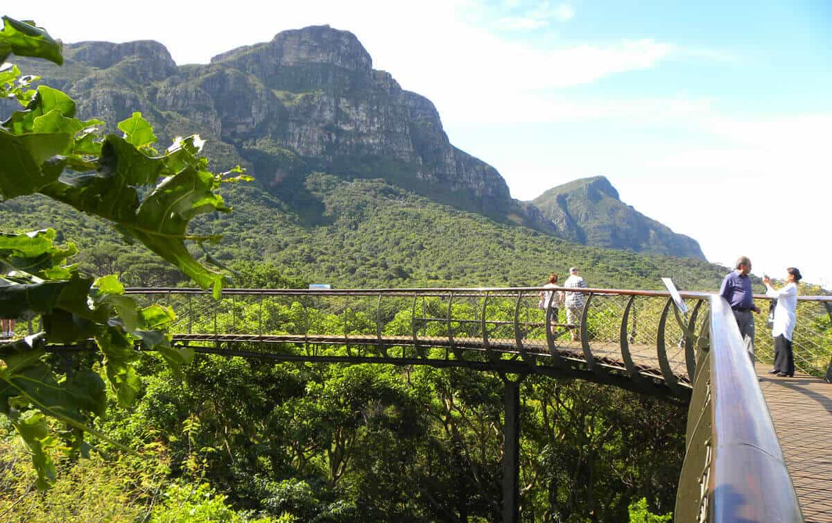 Boomslang tree canopy walkway. A visit to Kirstenbosch Botanical Gardens, Cape Town.