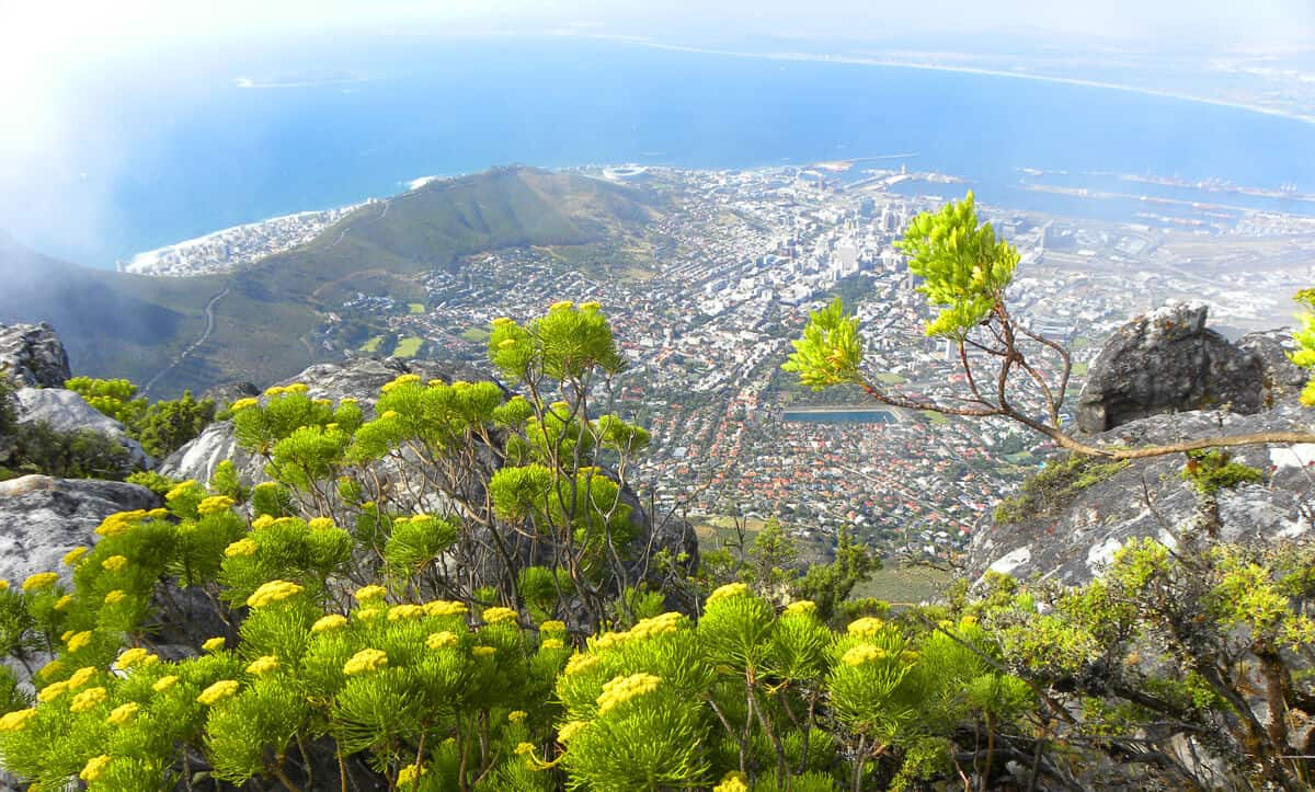 Cape Town from Table mountain. What you need to know about taking the Cable car up Table Mountain, Cape Town