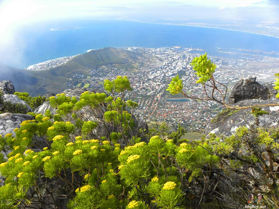 flowers, Table Mountain