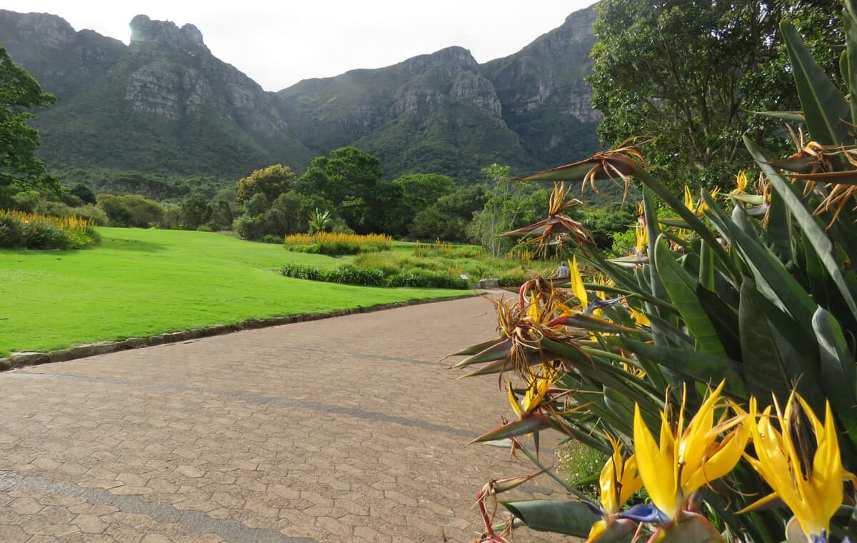 Birds of Paradise at Kirstenbosch Botanical Gardens, Cape Town