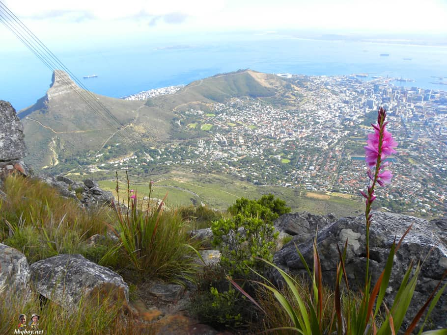 Hiking up Table Mountain, Cape Town - the India Venster trail (15)
