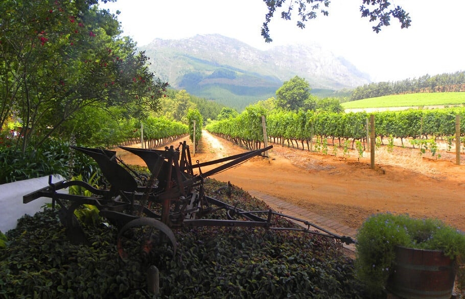 Simonsig. A guide to the best wineries of Stellenbosch and Franschhoek