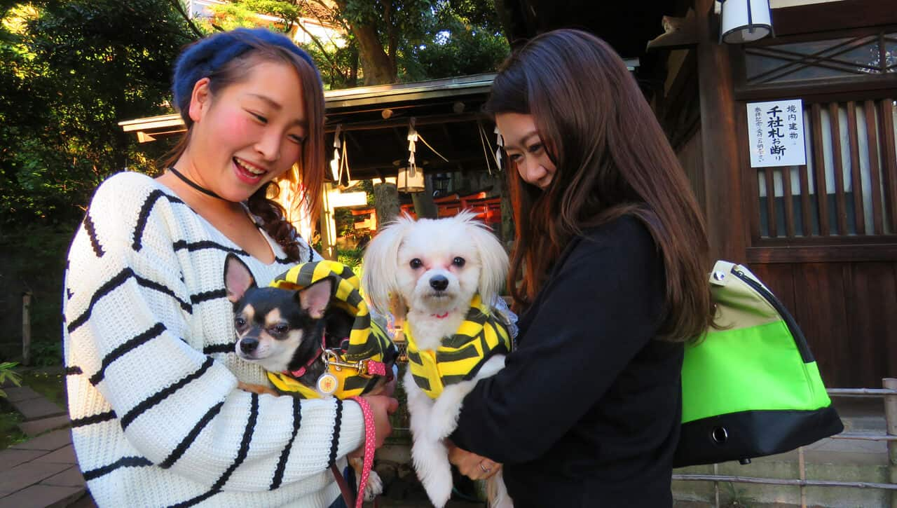 The Friendly Faces of Japan (and some pets)