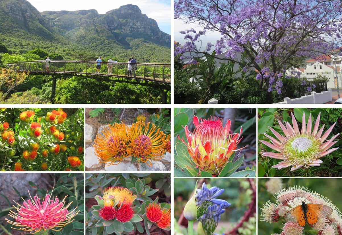 plants and flowers of South Africa