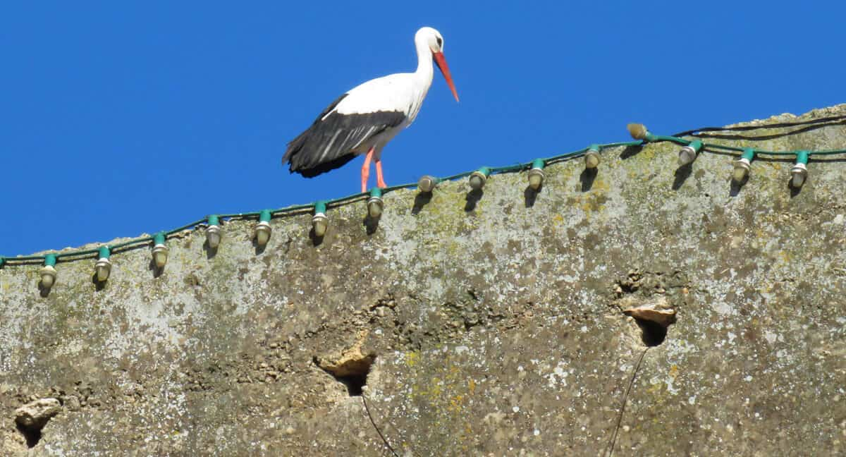 stork in Fez, Morocco. Fez or Marrakech? Which to Visit?