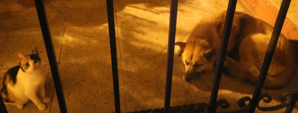 dogs and cats in Thessaloniki
