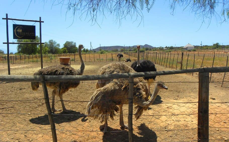 Oudtshoorn. 12 surprising places to see that you may never have heard of